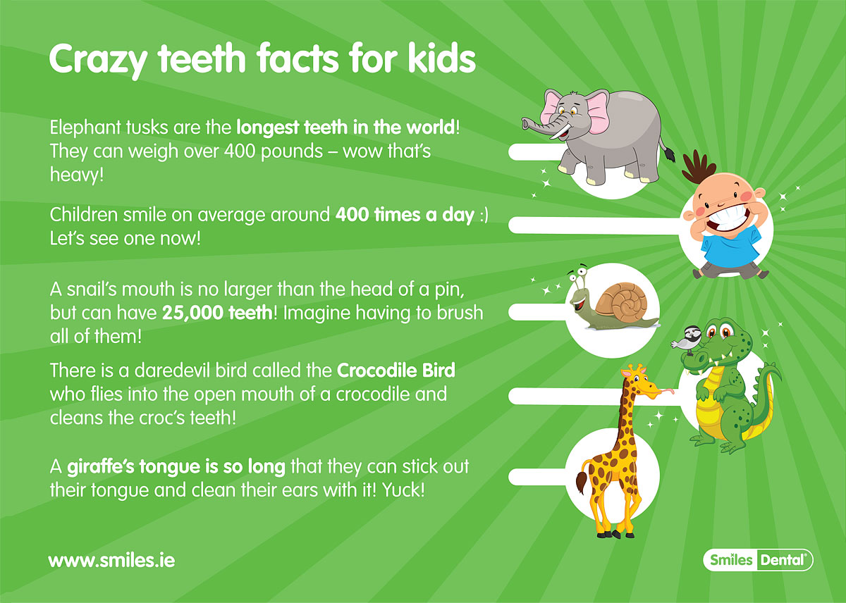 elephant tusks are the longest teeth in the world they can weigh over 400 pounds wow thats heavydownload print pdf